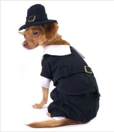 Puppe Love's Pilgrim Boy Costume for Dogs