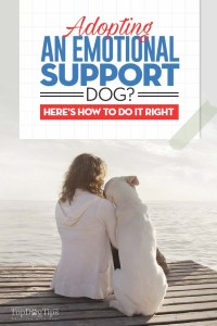 Adopting Emotional Support Dog