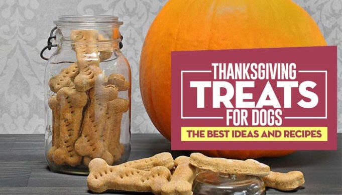 Best Thanksgiving Treats for Dogs
