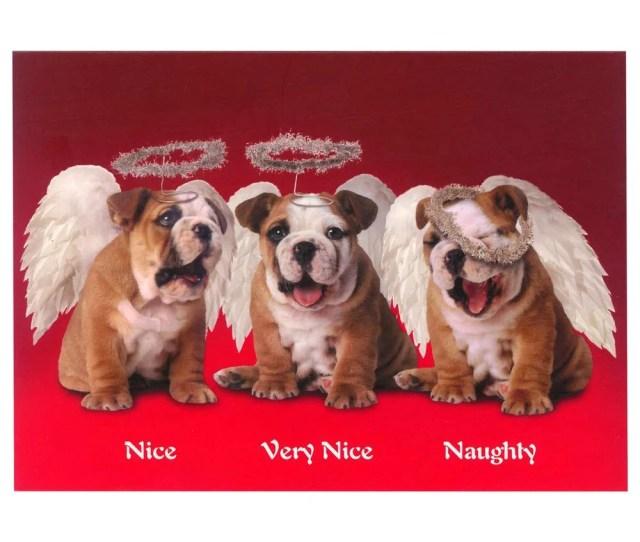 Nice Naughty Puppies