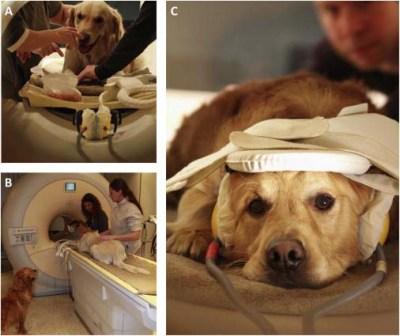 Dog FMRI Scan