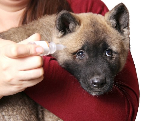Eye Drops For Dogs