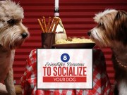 Scientific Reasons to Socialize Your Dog