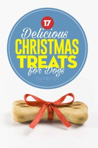The Best Christmas Dog Treats