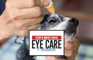 The Best Dog Eye Care Products