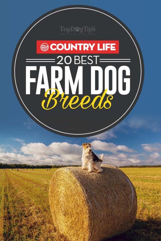 The Best Farm Dog Breeds