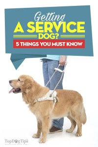 Things to Know When Getting A Service Dog
