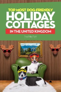 Top Best Dog Friendly Holiday Cottages and Accommodation in the UK
