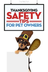 Top Thanksgiving Safety Tips for Pet Owners