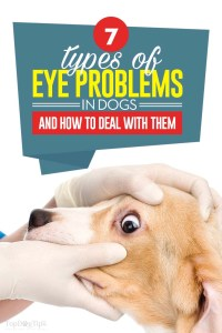What Are Eye Problems in Dogs