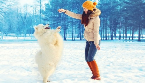 Winter Adventures with Your Dog