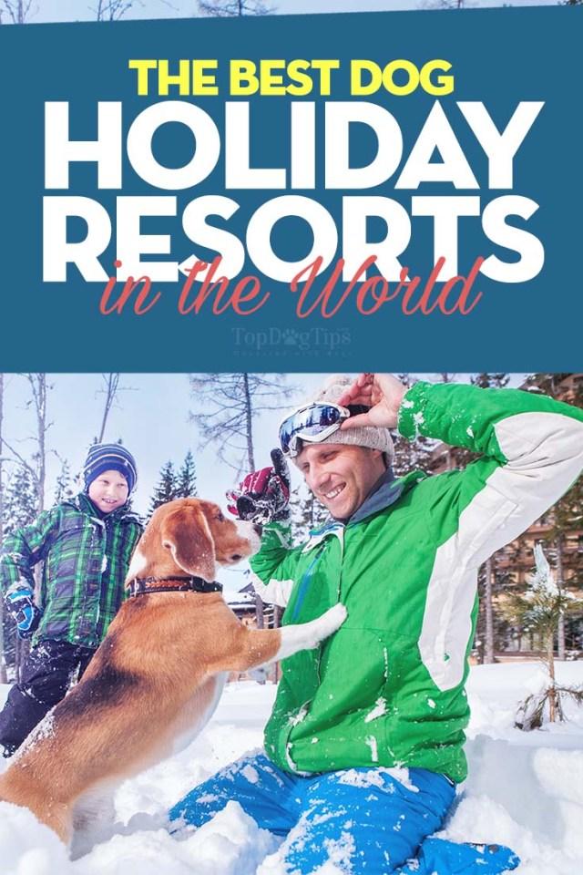 World's Best Dog-Friendly Holiday Resorts