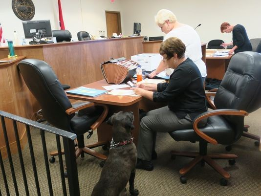 After Failing Careers 3 Times, Dog Finally Finds Purpose Helping People