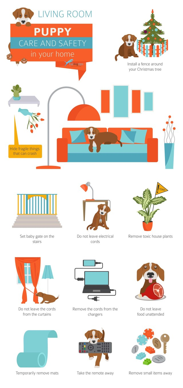 8 Ways to Puppy-Proof Your Home for Christmas Graphic