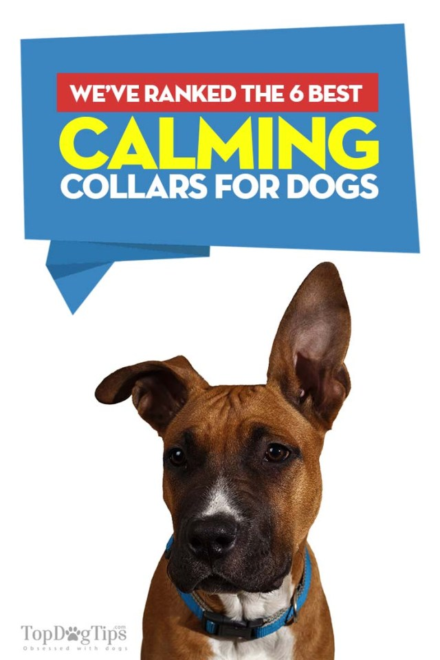 Best Calming Collars for Dogs to Soothe Anxiety