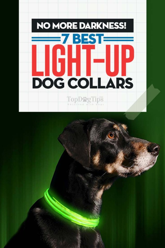 Best Rated Light Up Dog Collars 2020