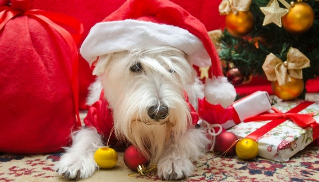 Christmas Decorations Safe for Dogs