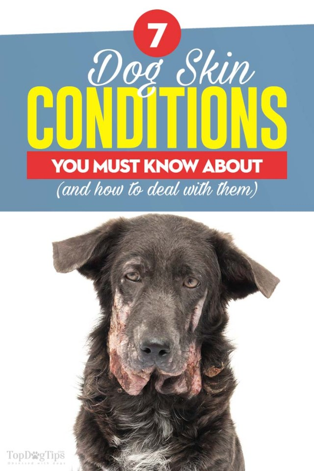 Common Dog Skin Conditions and What to Do About Them