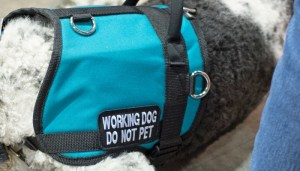 Outfitting a Service Dog