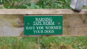 How Do Dogs Get Worms