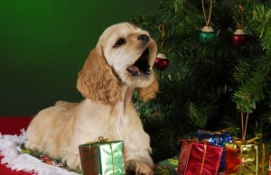 How to Keep Dog Away from Christmas Tree