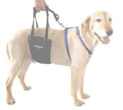 Measuring support sling dog harness