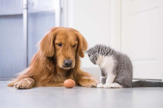 New Study Says Dogs Are Smarter Than Cats