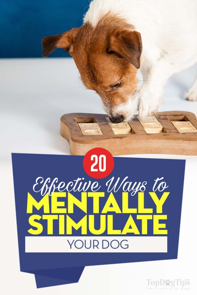 Tips on How to Do Dog Mental Stimulation
