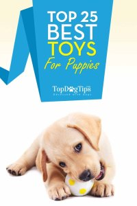 Top Rated Best Toys for Puppies