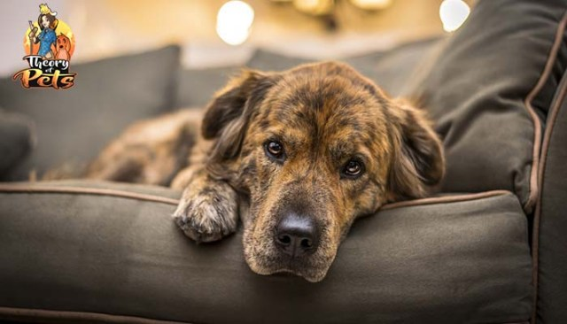 Trainer Tips on Dealing With Anxiety in Dogs