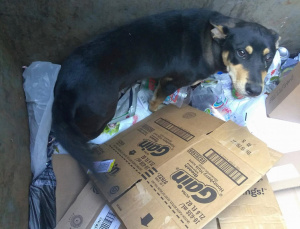 Dog Found Dying in a Dumpster Gets a Home for Christmas