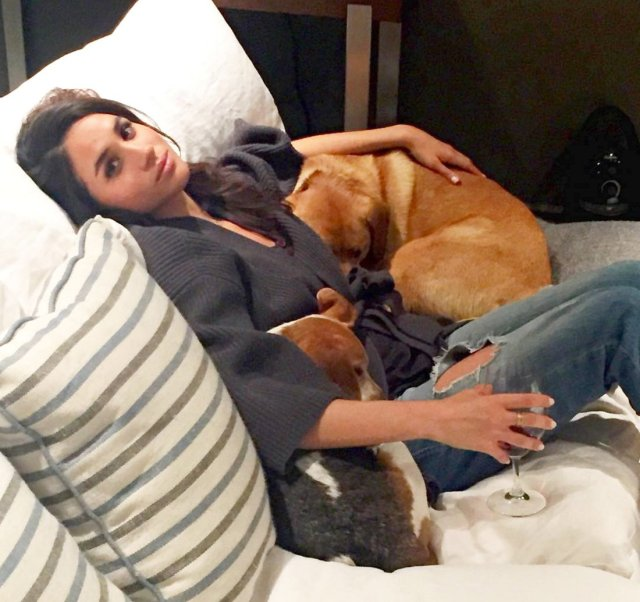 Meghan Markle Devastated Over the Injury of Her Rescued Dog