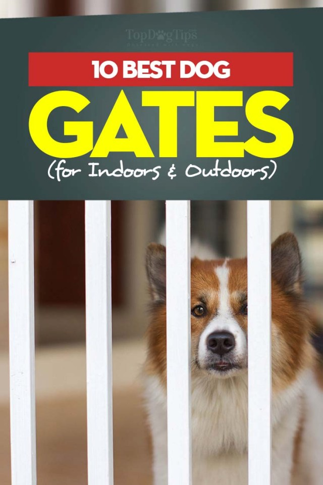 10 Top Rated Best Dog Gates for Indoors and Outdoors