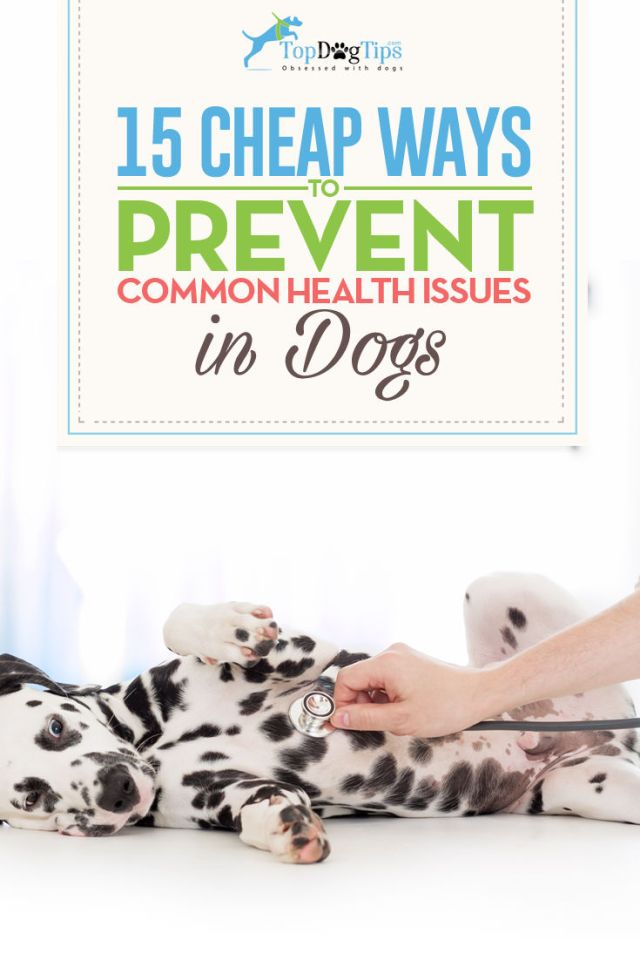 15 Ways to Prevent Common Health Issues in Dogs