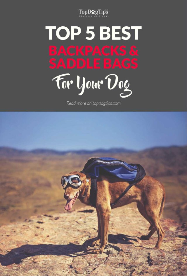 5 Top Rated Best Dog Backpacks and Saddle Bags