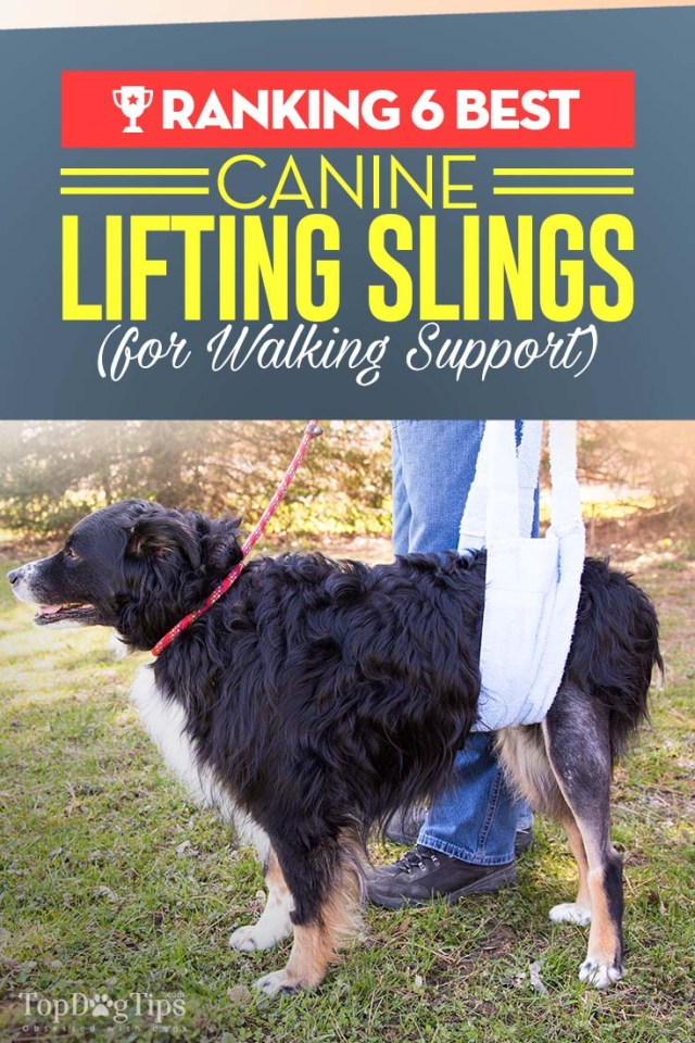 6 Top Rated Best Dog Sling Harness