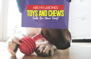 Are Nylabone Dog Toys Safe for Dogs and Puppies