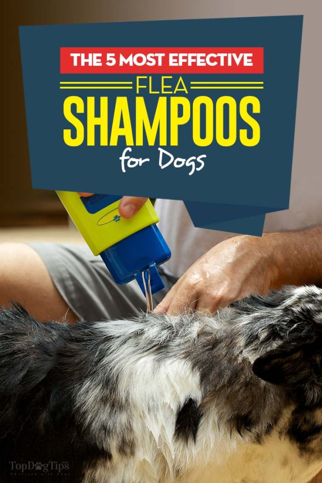 Best Flea Shampoos for Dogs We Liked