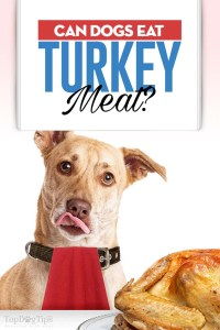 Can Dogs Eat Turkey Meat