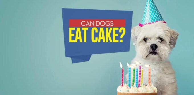 Can I give my dog cake