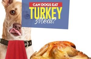 Can I give my dog turkey