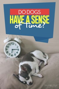 Do Dogs Have A Sense of Time