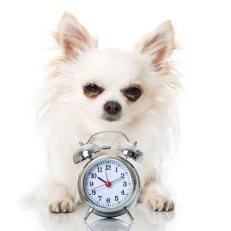 Do Dogs Sense Time