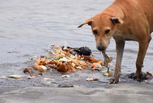 Dog Eating Injuries