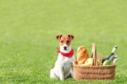 Go On a Picnic With Your Dog