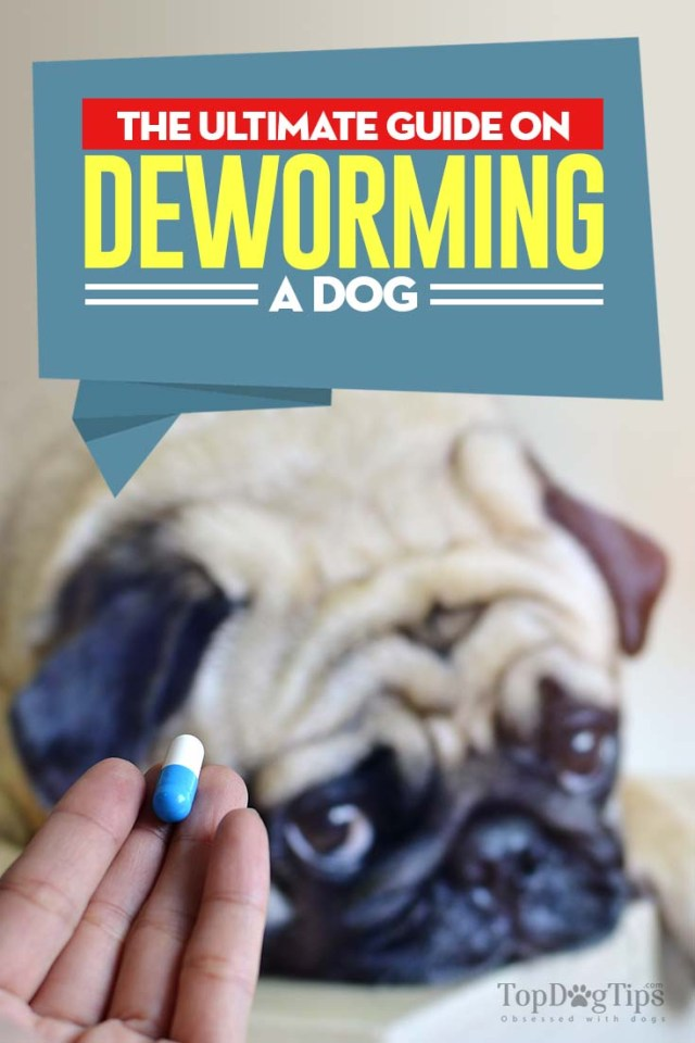 Guide on Deworming Dogs