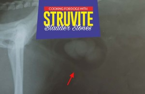 Guidelines and Diet for Dogs with Struvite Crystals