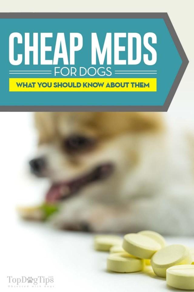 How to Buy Cheap Pet Meds Online