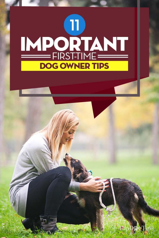 Important First Time Dog Owner Tips