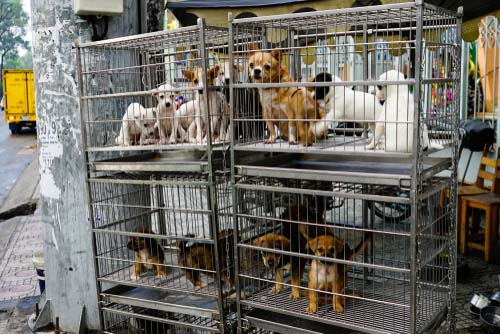 Tips on How to Find a Reputable Dog Breeder
